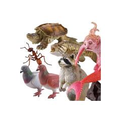 日本の動物コレクション 別巻 外来生物/新たな仲間たち