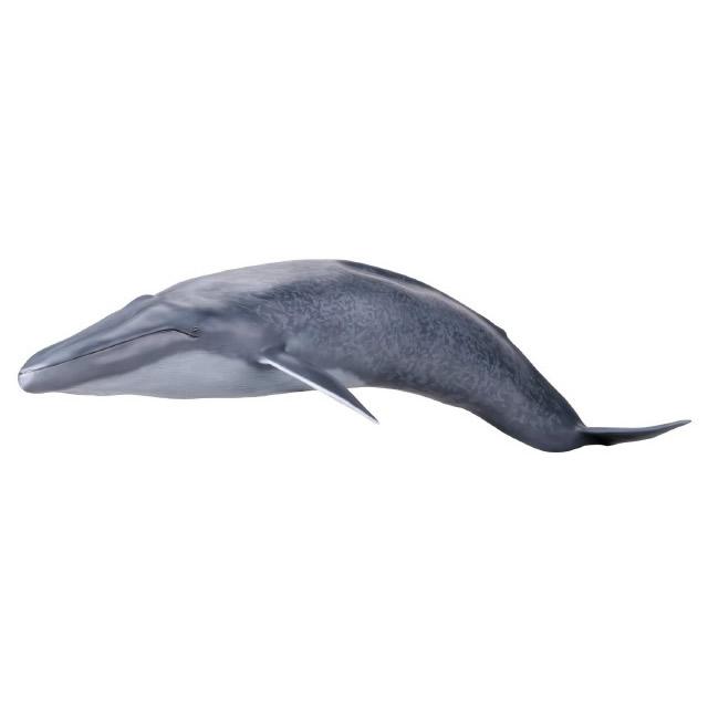 【メガソフビアドバンス】 MSA-04 シロナガスクジラ000_15_24