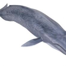 【メガソフビアドバンス】 MSA-04 シロナガスクジラ004_13_17