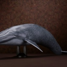 【メガソフビアドバンス】 MSA-04 シロナガスクジラ007_8_13