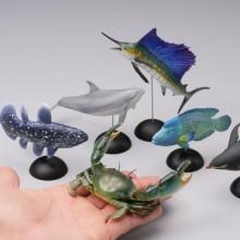 #1-002 シーラカンス(幼魚)atp002-5