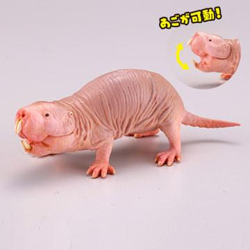 ハダカデバネズミの画像 p1_26