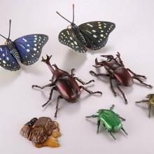 樹液に集まる昆虫たち 全6種