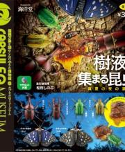 樹液に集まる昆虫 ~真夏の夜の宴~ 全6種/1回300円