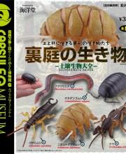 裏庭の生き物 -土壌生物大全- 全5種/1回300円