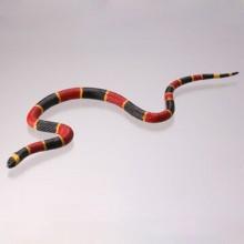 ホクベイサンゴヘビ