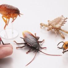 衛生害虫 全5種