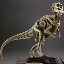 ティラノサウルス/ナチュラルカラー