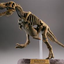 ティラノサウルス/化石カラー