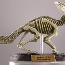 プロトケラトプス/ナチュラルカラー