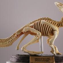 プロトケラトプス/化石カラー